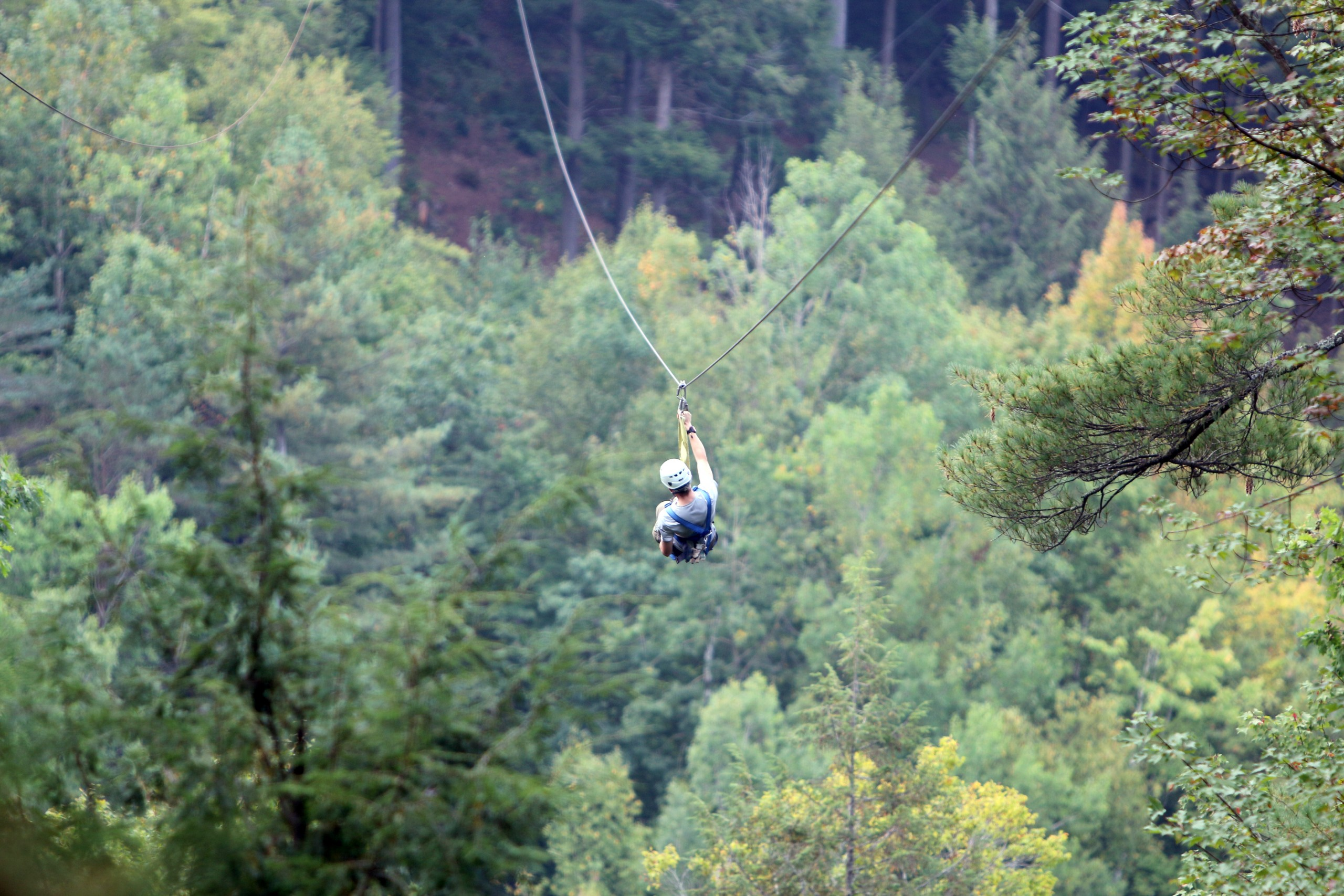 Ziplining Through the Trees