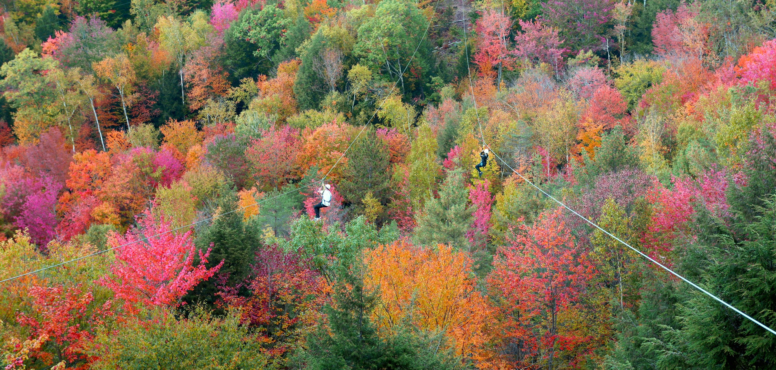 Dual Ziplining Through Peak Foliage