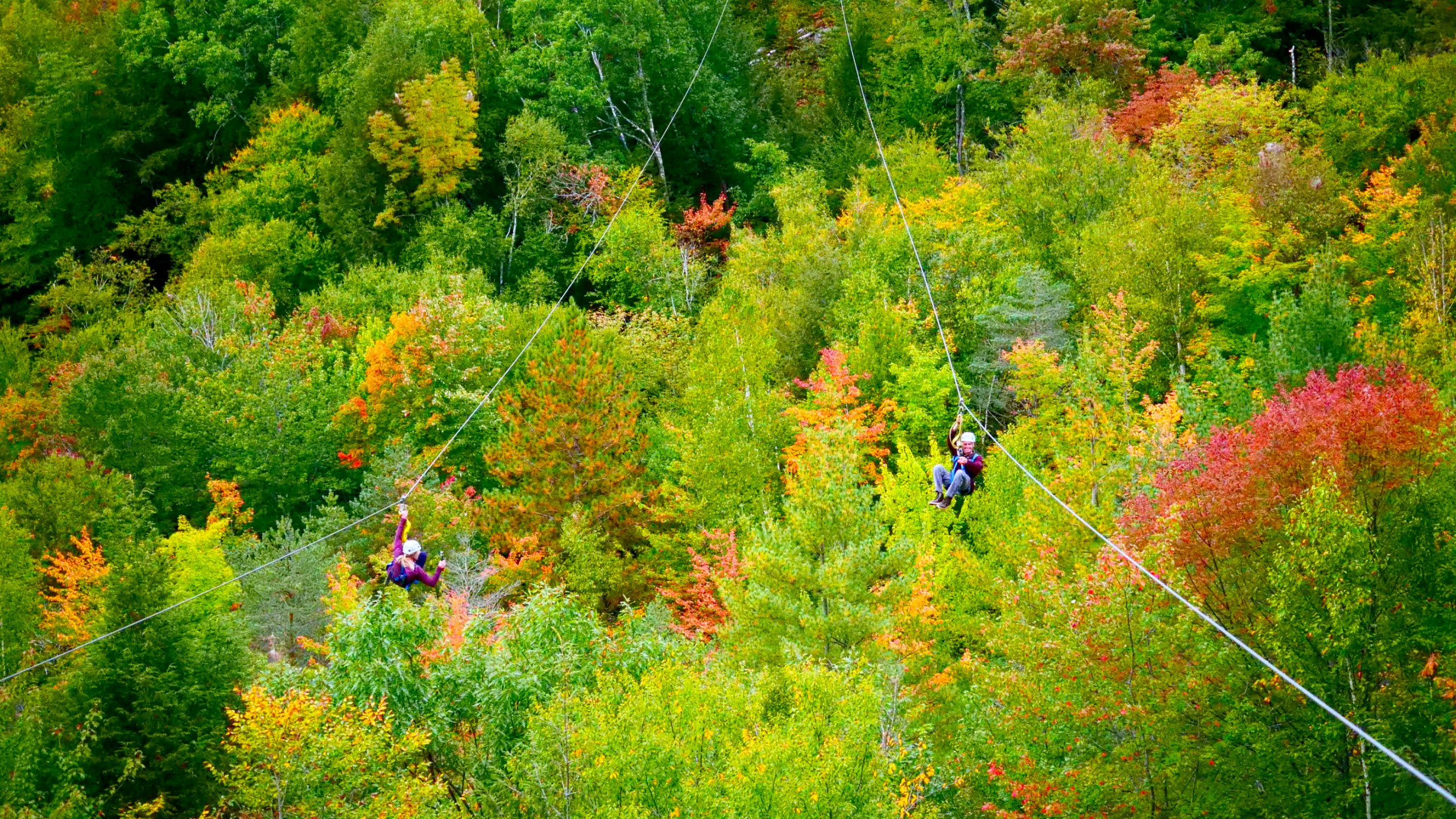 Dual Ziplining Through the Foliage
