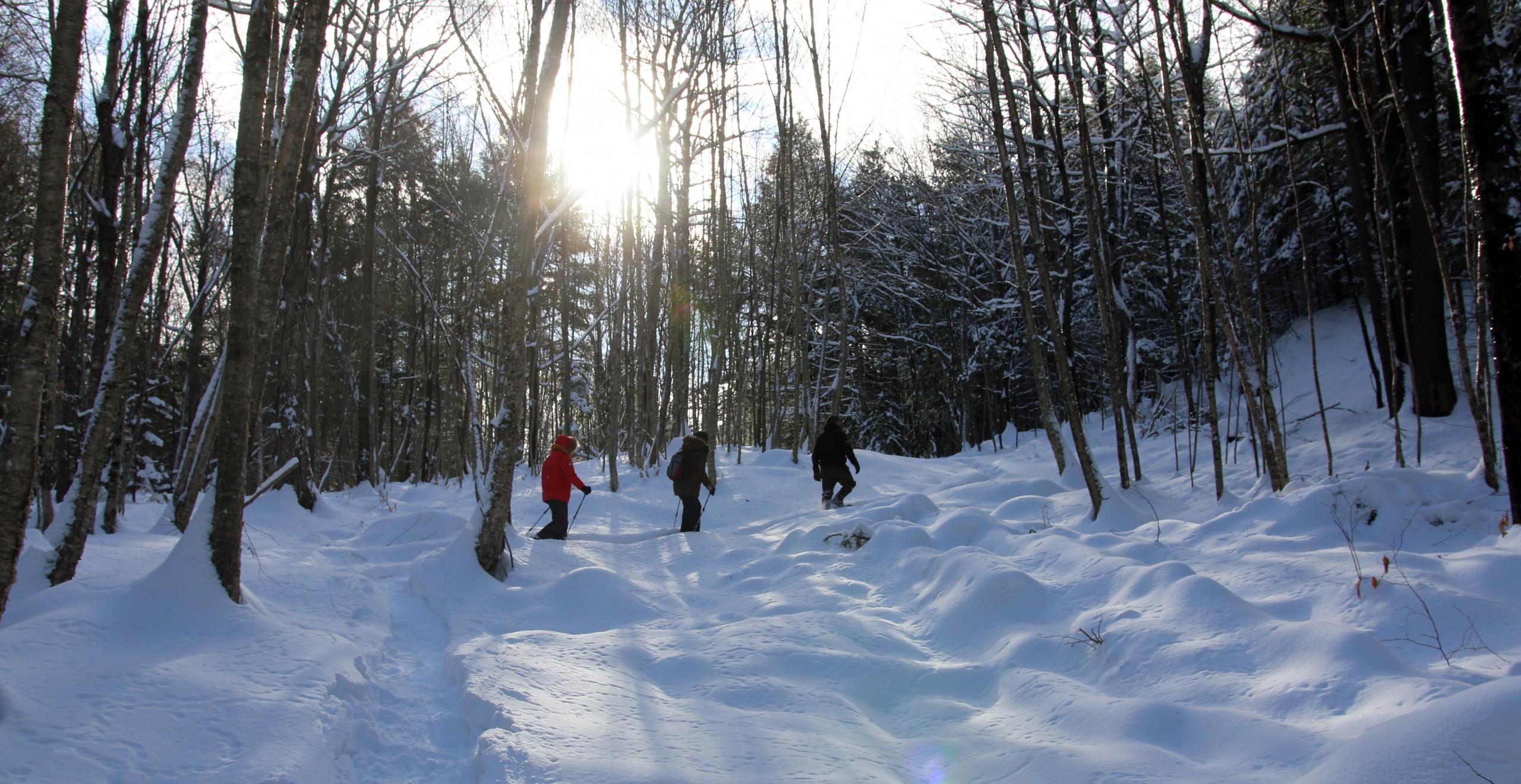 Winter Snowshoe Guided Trek