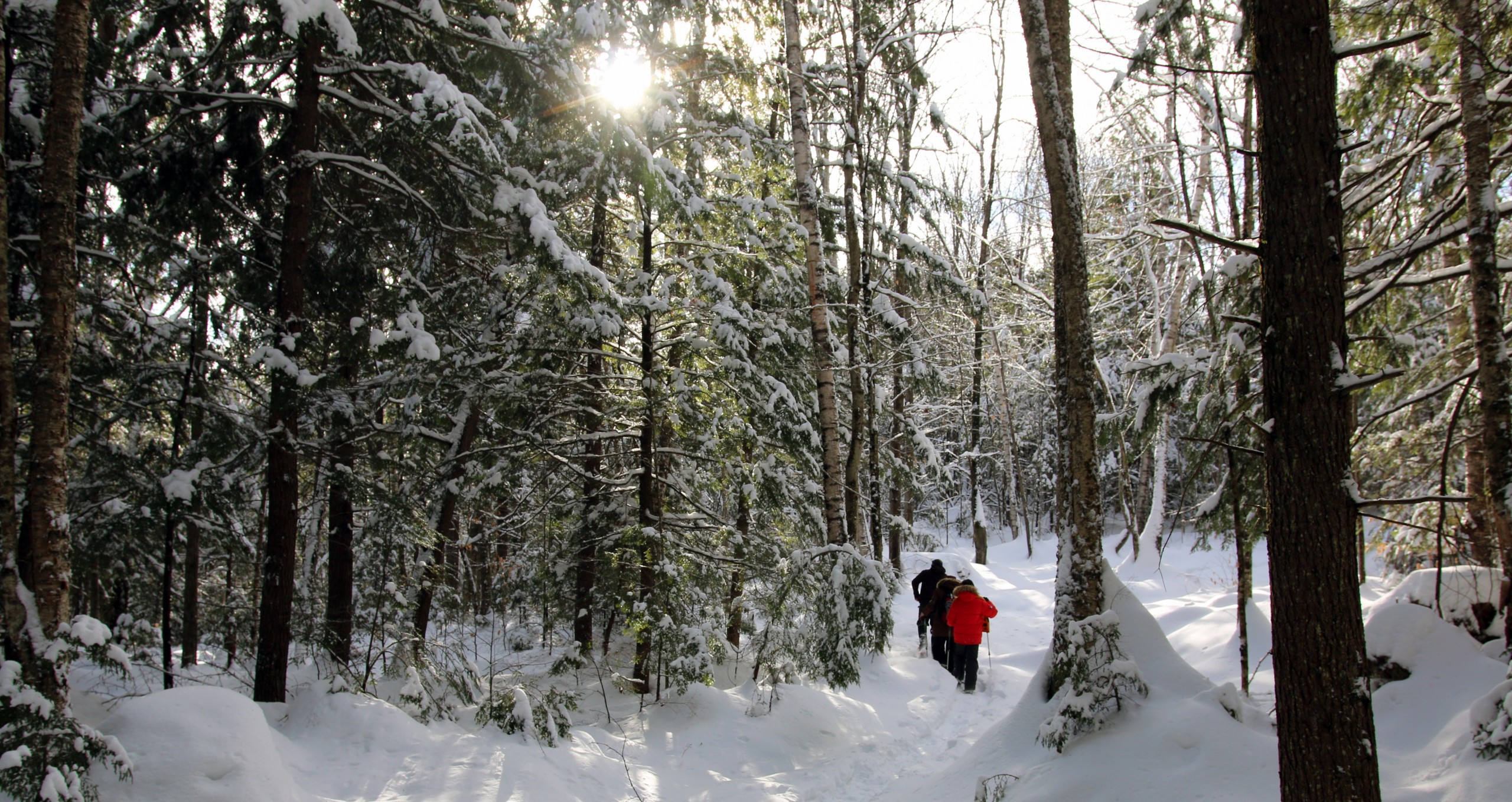 Guided Winter Snowshoe Tour