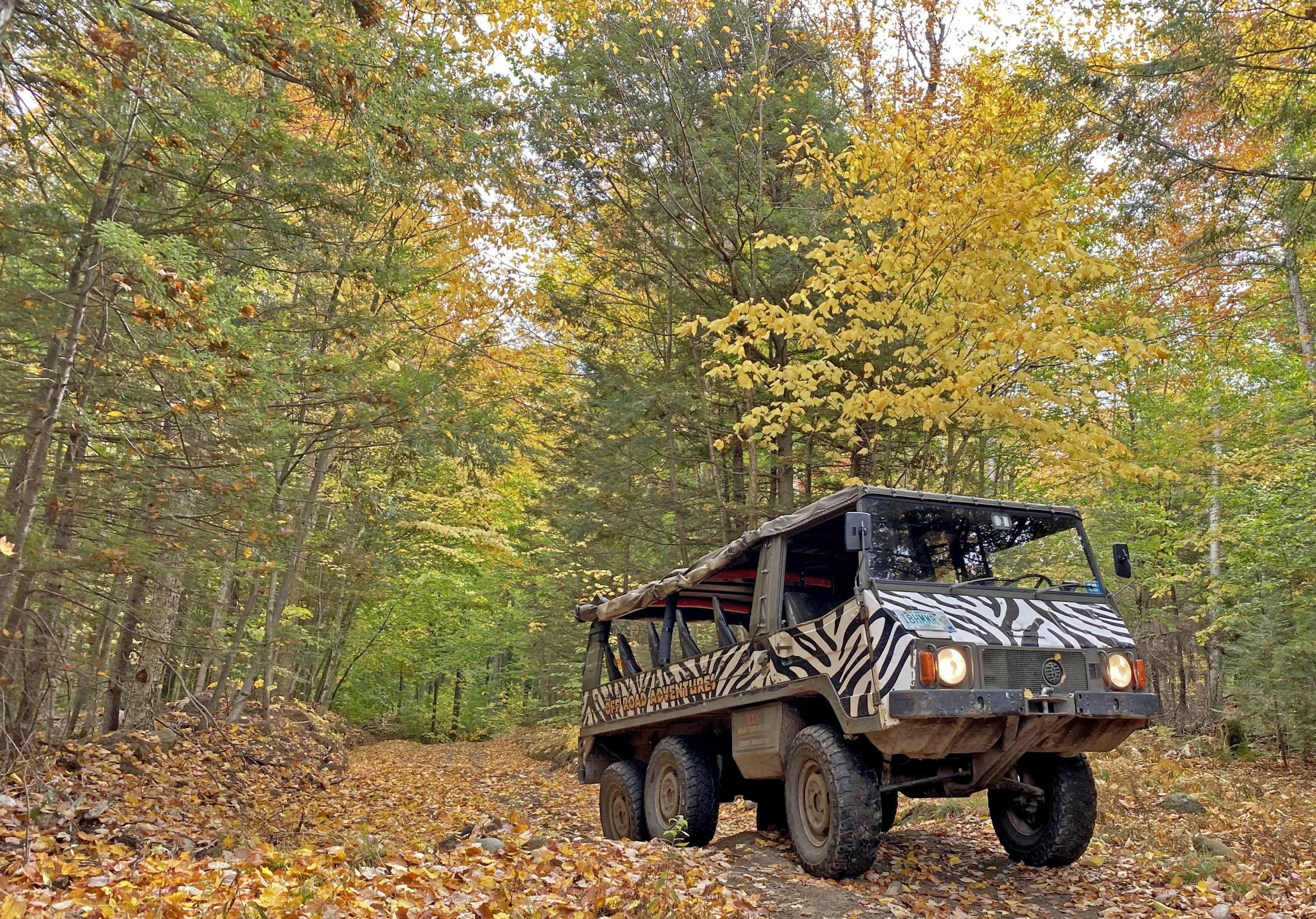 6 wheel Pinz Zebra